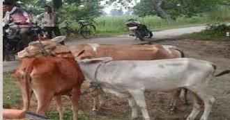 पशु चोरी के शक में युवक की पीट-पीटकर हत्या